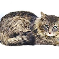 Adopt A Pet :: Nelson - Davis, CA