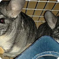 Adopt A Pet :: Blacky & Junior - Granby, CT