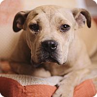 Adopt A Pet :: Indy - Portland, OR