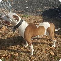 Adopt A Pet :: Arnold - East Orange, NJ