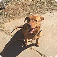 Adopt A Pet :: Libbie - Kingman, KS