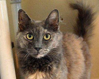 Domestic Shorthair Cat for adoption in Middletown, New York - SPF
