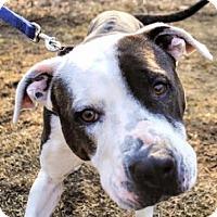 Adopt A Pet :: Chelsea - Mt. Pleasant, MI