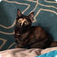 Adopt A Pet :: Sasha - Fort Worth, TX
