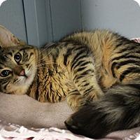 Adopt A Pet :: Snowey - New Richmond,, WI