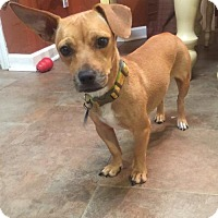Adopt A Pet :: Sunny - KANNAPOLIS, NC
