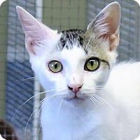 Adopt A Pet :: Britton - Gonzales, TX