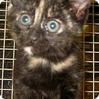 Adopt A Pet :: Essex - Dallas, TX