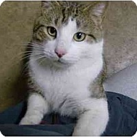 Adopt A Pet :: Tommy Boy - Jenkintown, PA