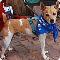 Adopt A Pet :: Glitch - Lake Forest, CA
