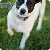 Adopt A Pet :: Augry - Tinton Falls, NJ