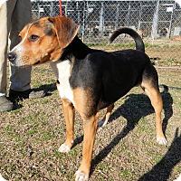 Adopt A Pet :: Henry - Charleston, AR