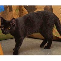 Adopt A Pet :: Ida - Chattanooga, TN