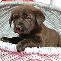 Adopt A Pet :: *Posh - PENDING - Westport, CT