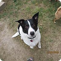 Adopt A Pet :: JACK - Nampa, ID