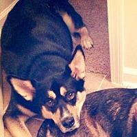 Adopt A Pet :: Aidan - Kennesaw, GA