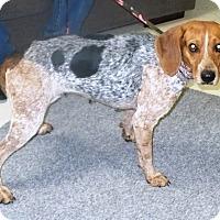 Adopt A Pet :: Marsha - Eastpoint, FL