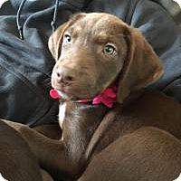 Adopt A Pet :: Roxy - Marlton, NJ