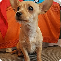 Adopt A Pet :: Beluga - Oakland, CA