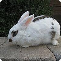 Adopt A Pet :: Stella - Santee, CA
