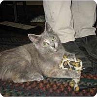Adopt A Pet :: Maggie - Portland, ME