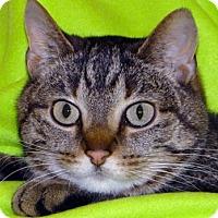 Adopt A Pet :: Lily - Renfrew, PA