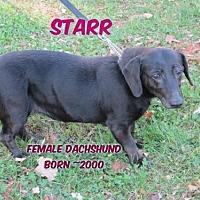 Adopt A Pet :: Starr - Huddleston, VA