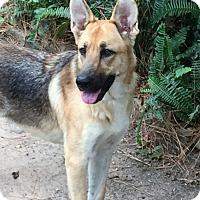 Adopt A Pet :: Melissa - Houston, TX