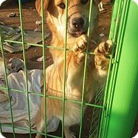 Adopt A Pet :: Elvin - Oakton, VA