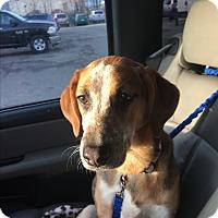 Adopt A Pet :: Kit - Pompton Lakes, NJ