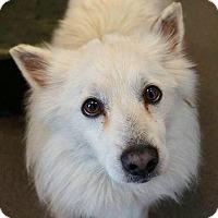 Adopt A Pet :: Yeti - Flower Mound, TX