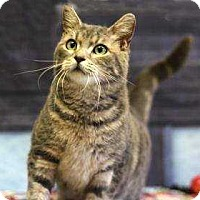 Adopt A Pet :: Black Canary - South Bend, IN