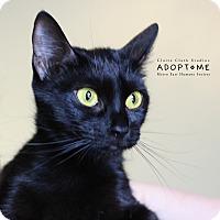 Adopt A Pet :: Amber - Edwardsville, IL