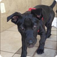 Adopt A Pet :: Petie - Loxahatchee, FL