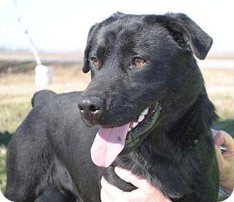 Labrador Retriever Mix Dog for adoption in Tunica, Mississippi - Tojo