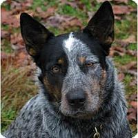 Adopt A Pet :: Colby - Siler City, NC