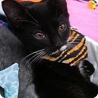 Adopt A Pet :: Tipper - Sterling Hgts, MI