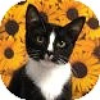 Adopt A Pet :: Juliette - Albany, NY