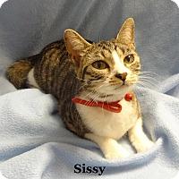 Adopt A Pet :: Sissy - Bentonville, AR