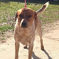 Adopt A Pet :: Busta - Baton Rouge, LA