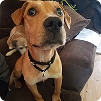 Adopt A Pet :: Eddie: loves walks! (WI) - Madison, WI