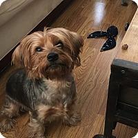 Adopt A Pet :: Gus - Rancho Santa Fe, CA