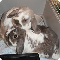 Adopt A Pet :: George II and Gracie - Newport, KY