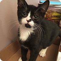 Adopt A Pet :: Milky Way - Old Bridge, NJ