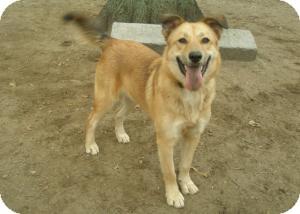 Mountain Cur Mix Dog for adoption in Acushnet, Massachusetts - Pepper