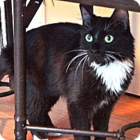 Adopt A Pet :: Layla - Escondido, CA