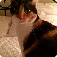 Adopt A Pet :: Belle - McDonough, GA