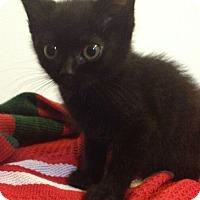 Adopt A Pet :: Izzie - Reston, VA