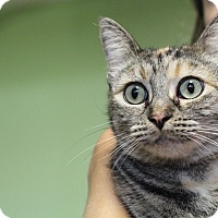 Adopt A Pet :: Kitty Katy - Los Angeles, CA