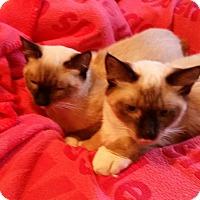 Adopt A Pet :: Lito -Adoption Pending! - Colmar, PA